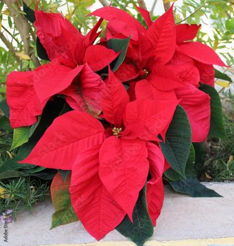 Fotografie, Obraz  Pretty red easter flower