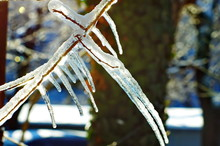 Icicles On Branch Of Tree. Early Spring Sunny Natural Background