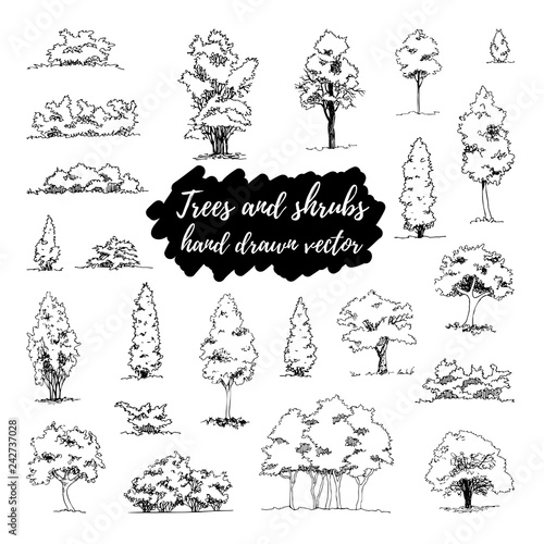 Obraz na plátně Set of hand drawn architect trees and shrubs, vector sketch, architectural illus