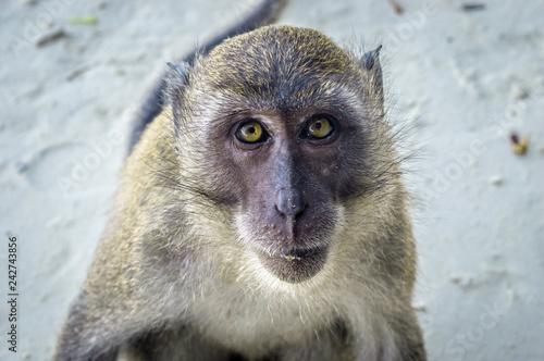 Foto op Aluminium Aap Monkey Beach Profile
