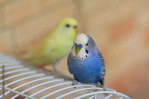 Two parrots are sitting on the cage. Birds