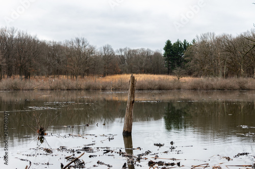 Fotografie, Obraz  Tree Branch Sticking out of a Pond in a Forest during Winter in Suburban Willow