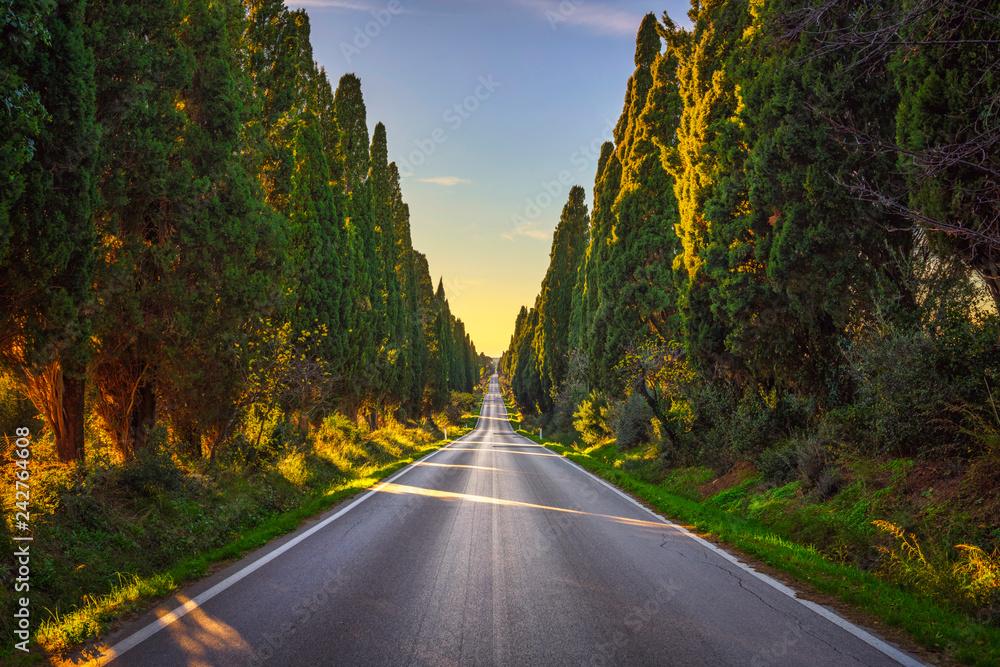 Fototapety, obrazy: Bolgheri famous cypresses tree straight boulevard. Maremma, Tuscany, Italy