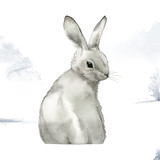 Wild gray rabbit in a winter wonderland painted by watercolor vector - 242771823