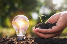Light Bulb On Soil And Hand Ho...