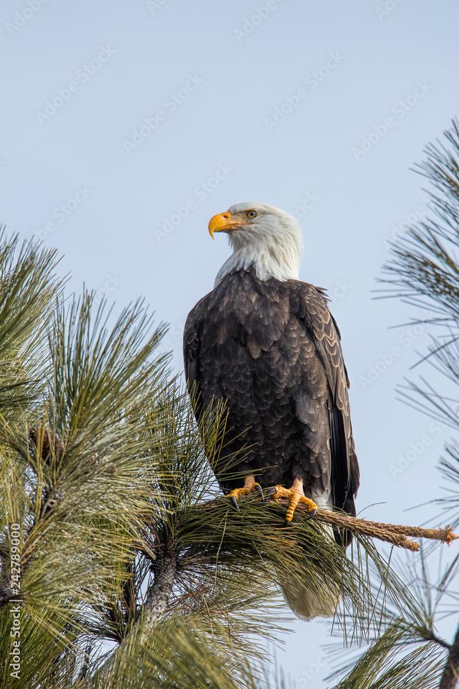 Majestic eagle on a sunny day.
