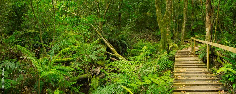 Fototapeta Path through rainforest in the Garden Route NP, South Africa