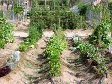 Mediterranean Vegetable Garden