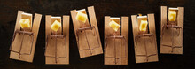 Row Of Mousetraps With Cheese