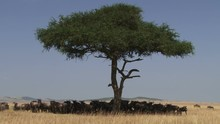 A Lone Tree Standing In The Pl...