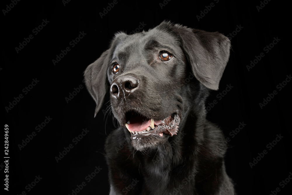 Fototapety, obrazy: Portrait of an adorable mixed breed dog