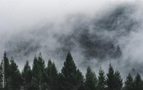 Poster Taupe Mgła na zboczu góry