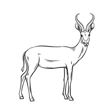 Antelope Outline