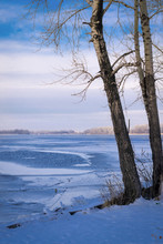 Trees On The Shore Of A Frozen River Icebound