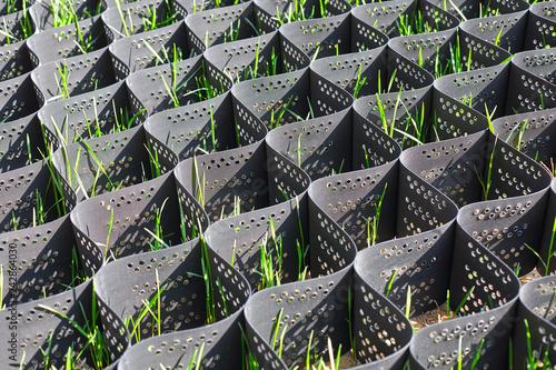 Fototapeta Green grass in a plastic black honeycomb frame to prevent soil erosion on the sl