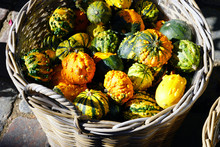 Basket Of Colorful Decorative Pumpkins And Gourds In The Fall
