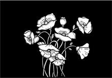 Flowers Poppies. White Line On A Black Background.  Element Design For Druku, T-shirt, Poster, Picture, Banner, Bag. Raster Craid Malyunok On Doshts.