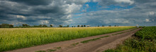 Wheat Field And Dirt Road, Rural Landscape. Web Banner.