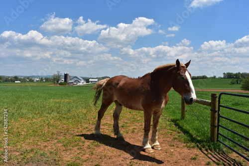 Photo  Chestnut Draft Horse Standing in a Large Field