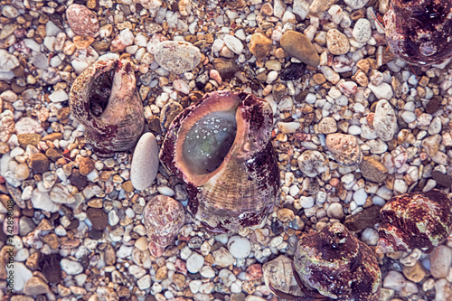 Background of the beautiful exotic shell and stones