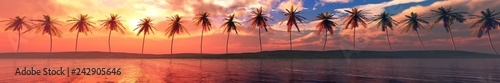 Fotografia, Obraz Palm trees over the water, a panorama of palm trees in a row at sunset by the se