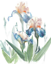 Flowers Garden Irises Beautifu...