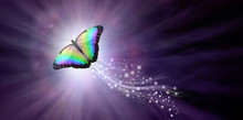 Multicoloured Butterfly Taking Flight Into The Light - A Large Butterfly Rising Up With A Trail Of Sparkles Against A Purple Radiating Background Into The Light With Copy Space