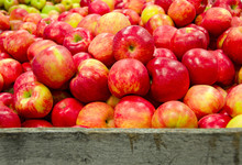 Red And Yellow Michigan Apples In Rustic Wooden Crate