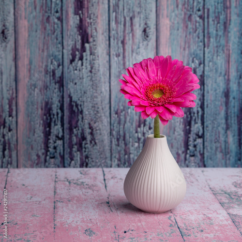 Fotografie, Obraz  Still life background, pink Gerber flower in a vase