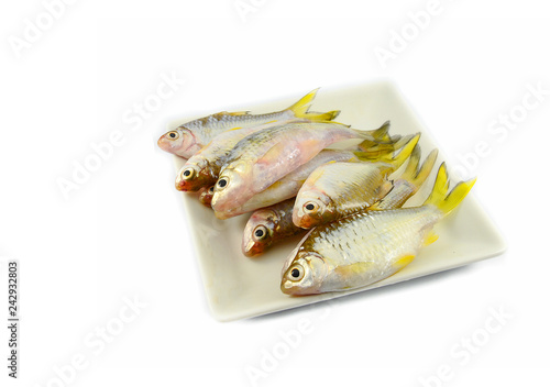 Fényképezés  small fish isolated / siamese mud carp fish isolated on white - yellow tail fish