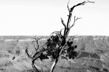 Grand Canyon From The Rim