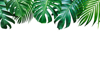 Summer tropical leaves on white background with copy space