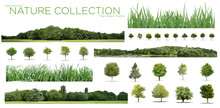 Very High Definition Treeline, Grass And Tree Collection Isolated On A White Background