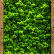 Green Moss Background Texture Close Up Top View Interior Design