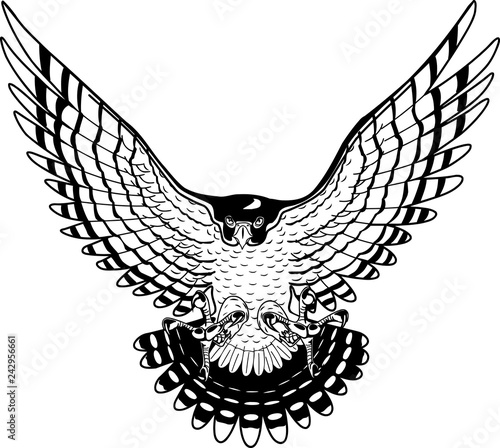 Photo  Peregrine Falcon Vector Illustration