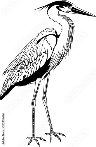 Fotografía Great Blue Heron Vector Illustration