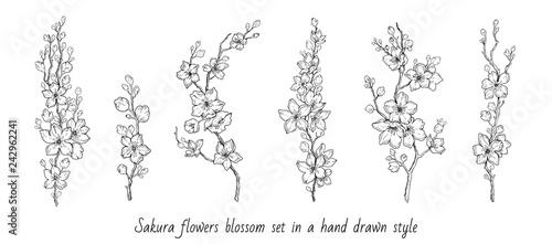 Foto Sakura flowers blossom set, hand drawn line ink style