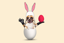 Easter French Bulldog In Bunny...