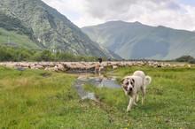 Georgia - Mountains - Kaukaz