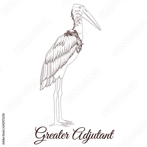 Greater adjutant stork cartoon bird coloring Wallpaper Mural