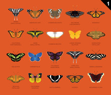 US Butterfly Species Name Set 1