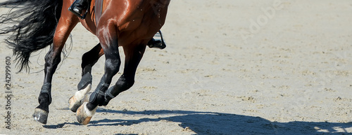 Fototapeta Sorrel dressage horse and rider in uniform performing jump at show jumping competition. Equestrian sport background. Chesnut horse portrait during dressage competition. Selective focus. obraz