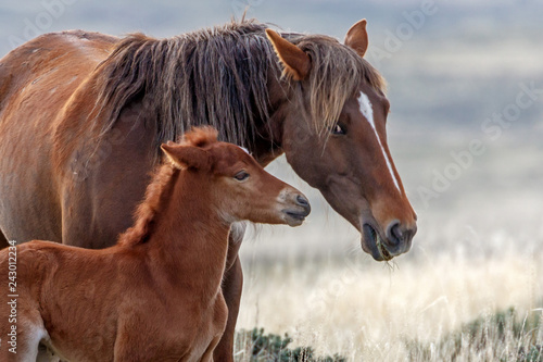 Wild Horse and Foal