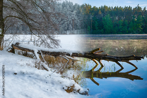 Fotografie, Obraz  Winter spring combined photo of fallen tree. Masuria. Poland.