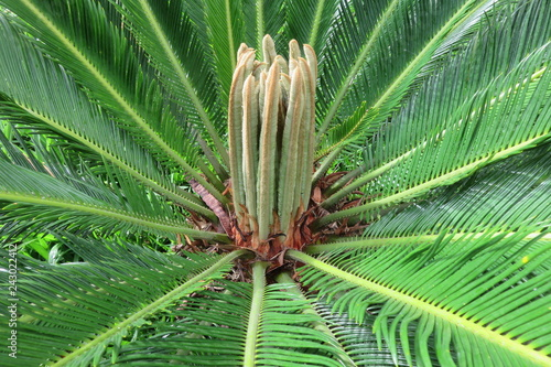 Canvas Prints Palm tree EDISON ARAUJO