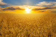 canvas print picture - summer golden wheat field at the sunset