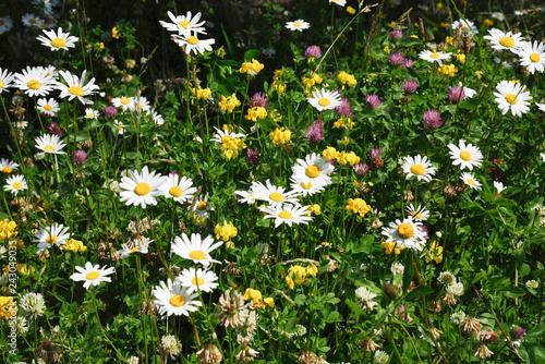 Fotografie, Obraz  Flowers in Full Bloom in an Irish Garden