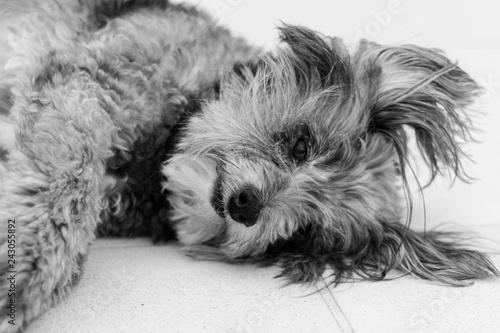 Foto  Cachorro dormindo