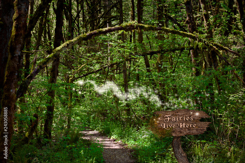Photo Stands Road in forest Fairies in forest on magical path with glowing sparkles of light