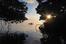Mangrove Trees Silhouetted Aga...